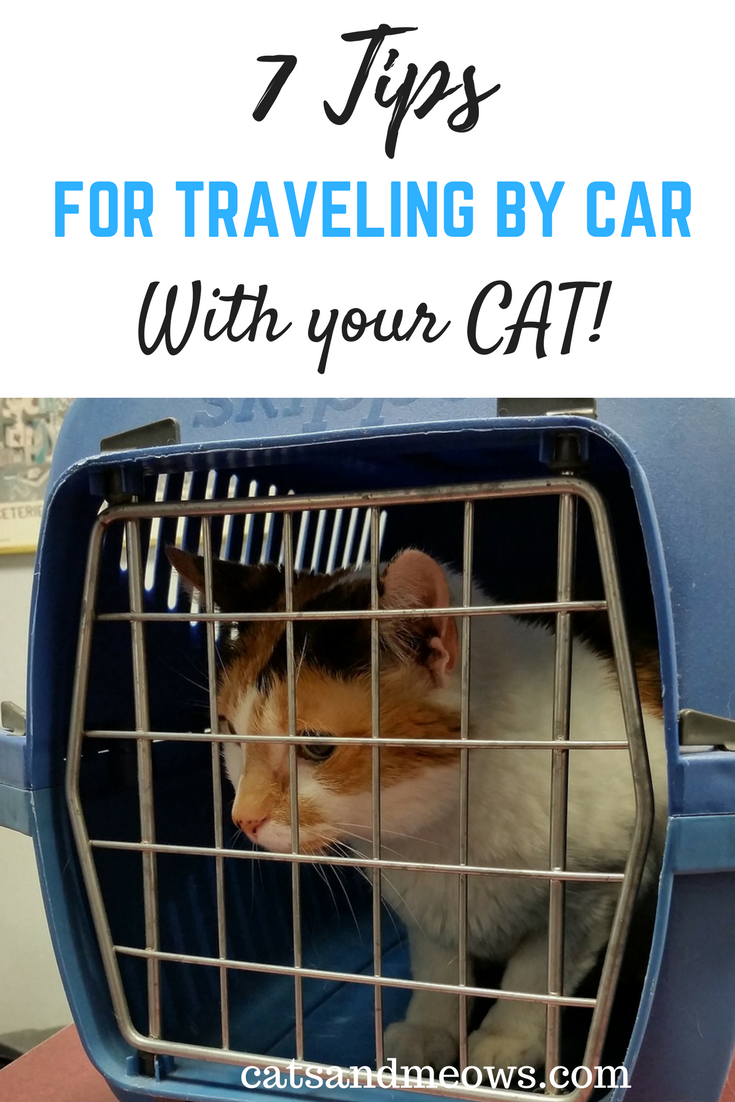 7 Tips For Traveling By Car With Your Cat Cats And Meows
