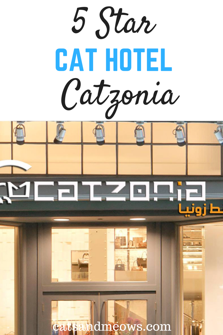 Catalonia: World's First Five Star Cat Hotel - For Your Special Pet