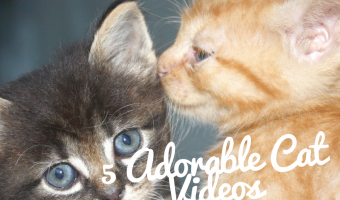 5 Adorable Cat Videos You Just Have to See
