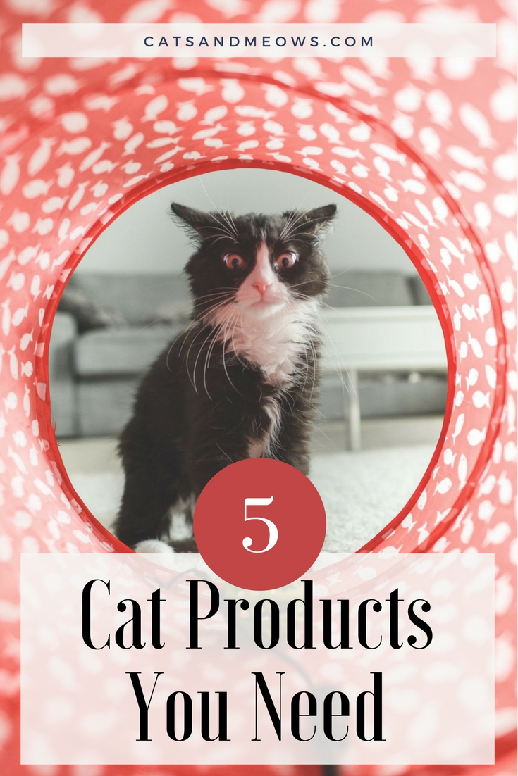 5 Cat Products You Need