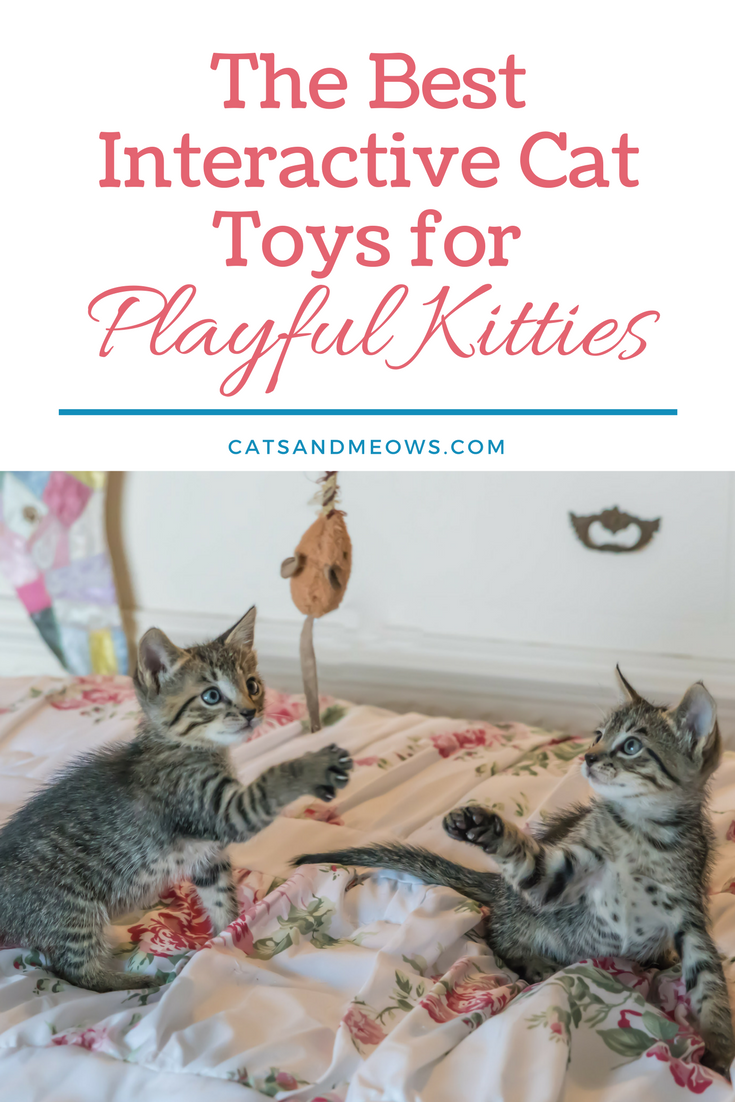 The Best Interactive Cat Toys for Playful Kitties