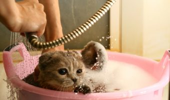 What To Do If Your Cat Comes Home Covered In Motor Oil