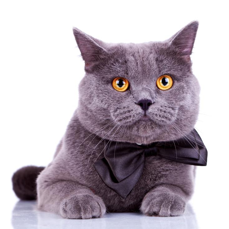 5 Cutest Cat Fashion Accessories