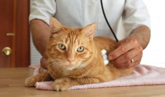 5 Reasons Why You Should Spay or Neuter Your Cat