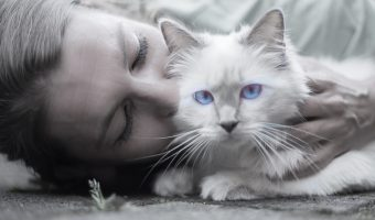 Do Cats Like Kisses?