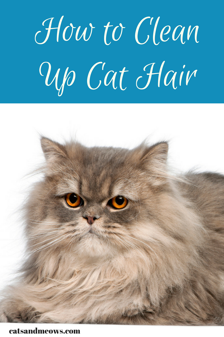 Long Haired Kitty? How to Clean Up Cat Hair