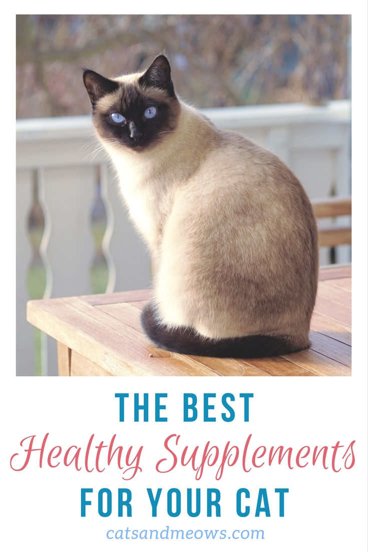 he Best Healthy Supplements for your Cat