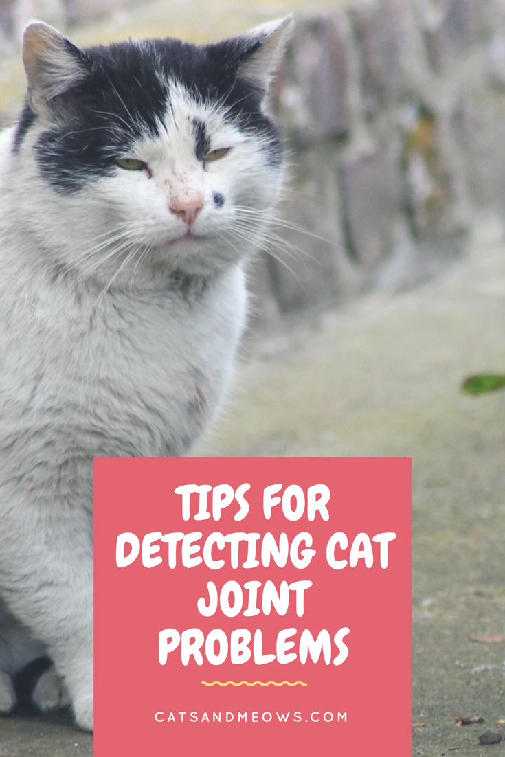 Tips for Detecting Cat Joint Problems