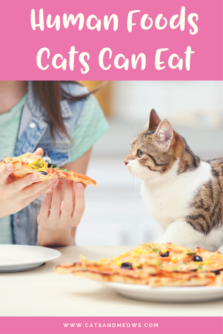 Here Are The 'Human Foods' Your Cat Can Eat Too