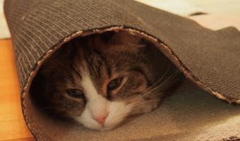 5 Weird Cat Behaviors Explained