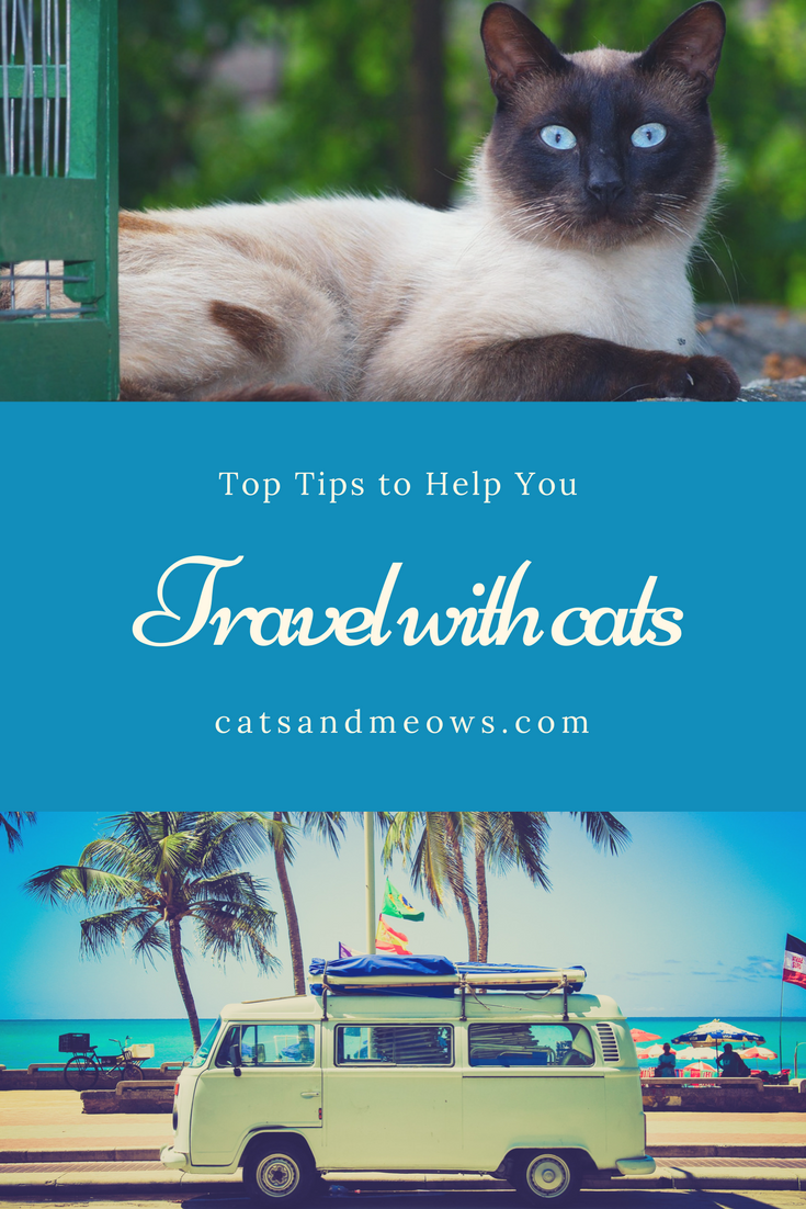 Top Tips for Moving with Cats