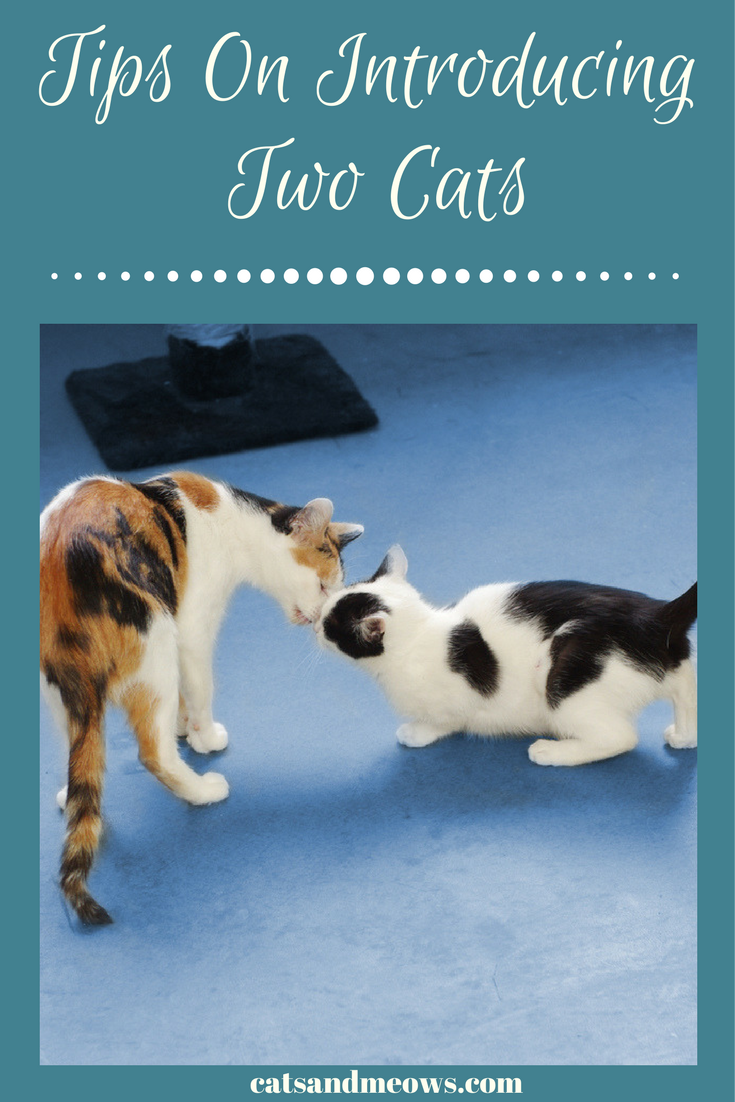 Tips On How to Introduce Two Cats
