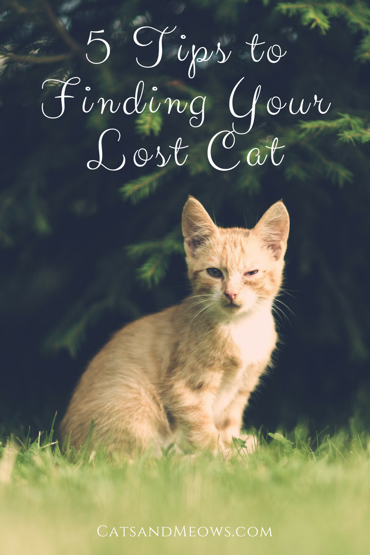 5 Tips to Finding Your Lost Cat