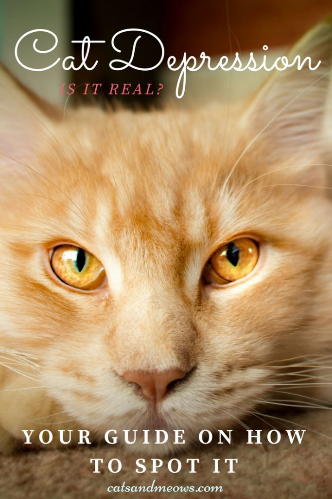 Cat Depression- Is It Real And How To Spot