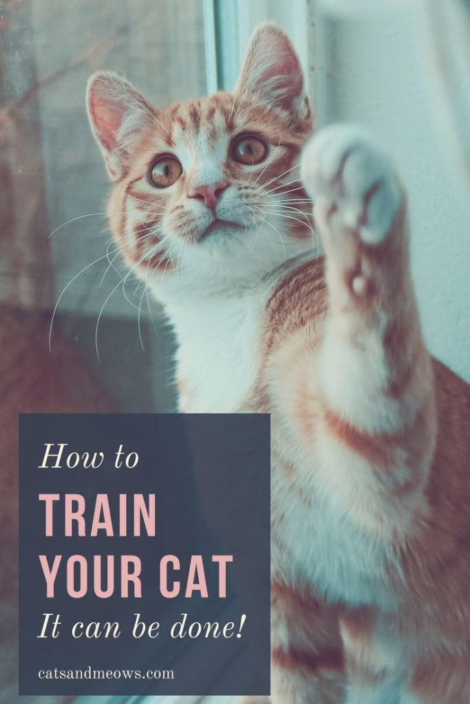 How to Train Your Cat (It Can be Done!)