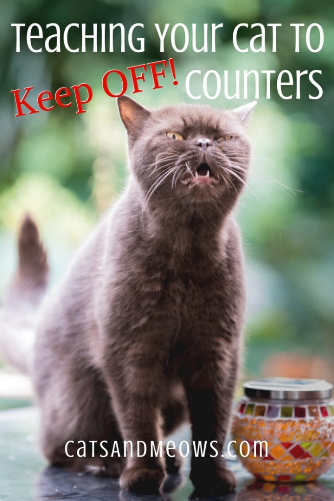 Teaching your Cat to Keep off Counters