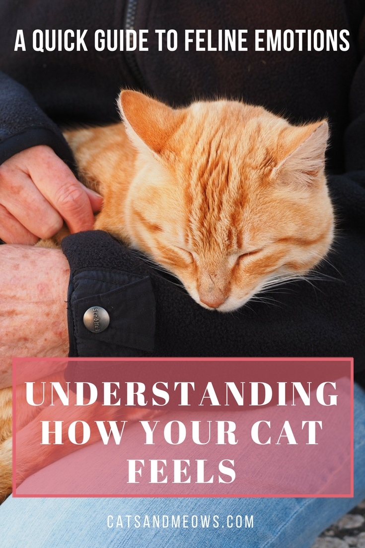 Understanding How Your Cat Feels: A Quick Guide To Feline Emotions