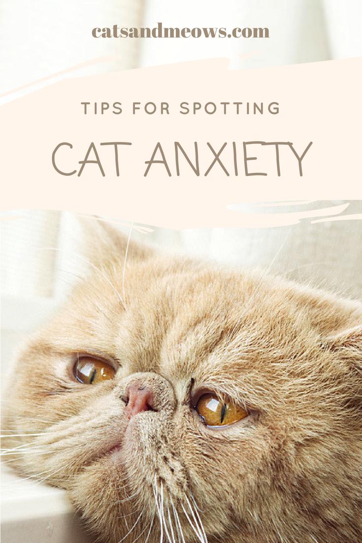 Tips for Spotting Feline Anxiety in Multiple Cat Households