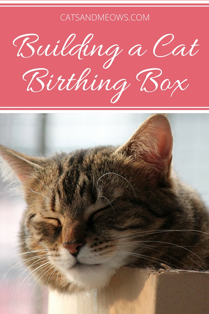 How To Build a Cat Birthing Box