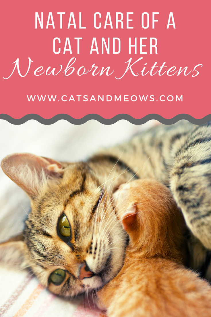 Post-Natal Care of a Cat and Her Newborn Kittens