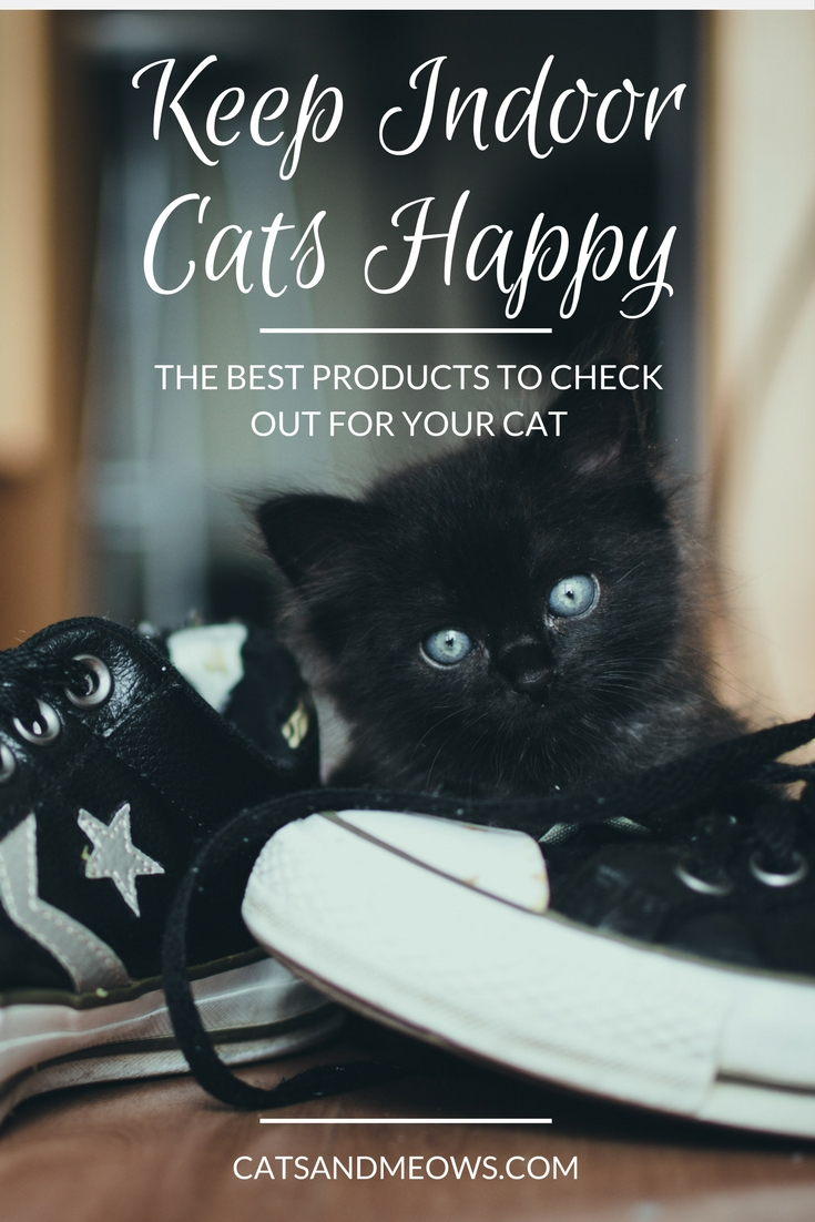 The Best Products to Keep Indoor Cats Happy