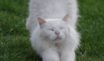 Cat Yoga Meowga is Trending
