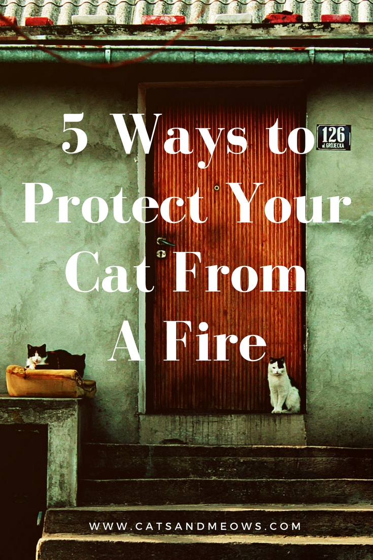 5 Ways to Protect Your Cat From A Fire