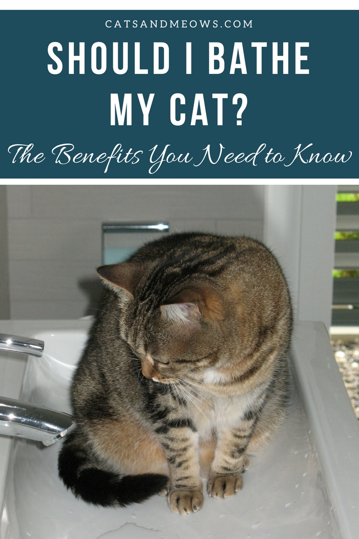 Should I Bathe My Cat- The Benefits You Need to Know