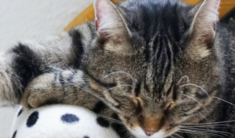 5 Myths About Pet Cats