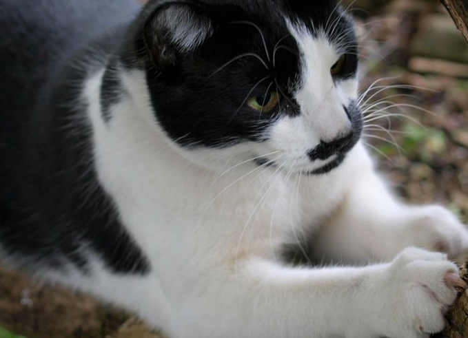 5 Ways that Scratching Benefits your Cat