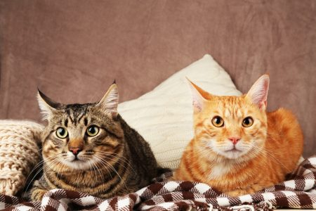 Cats and Medications – Antibiotic Info Pet Owners Need to Know