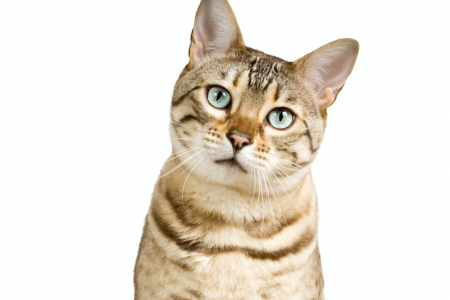 New Study Proves Cats are Just as Trainable as Dogs – Here's The Surprising Reason Why