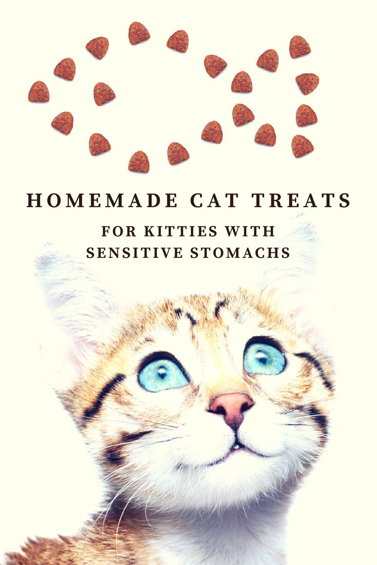 Homemade Cat Treats for Kitties With Sensitive Stomachs - RECIPE